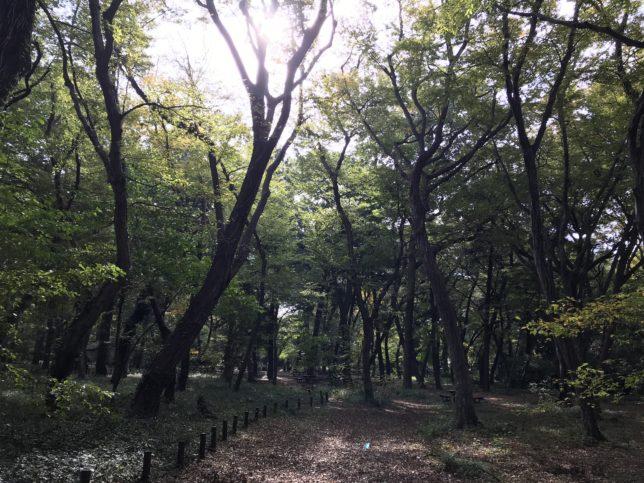 神代植物園雑木林20171104