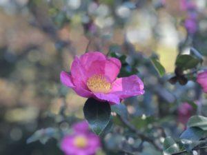 紫雲台(しうんだい)武蔵丘陵森林公園