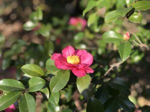 色も香も 武蔵丘陵森林公園