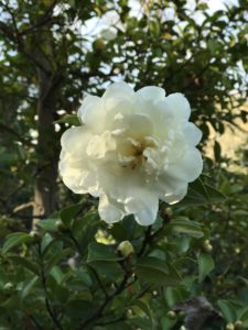 ホワイトブーケ 武蔵丘陵森林公園