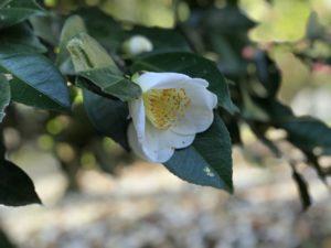 加賀八朔 武蔵丘陵森林公園