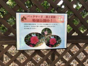 武蔵丘陵森林公園特別展示