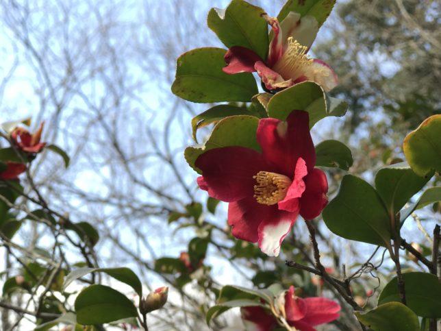 鎌倉 横浜こどもの国椿の森