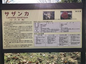 亀戸中央公園サザンカ園看板