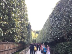 銀閣寺椿の生垣