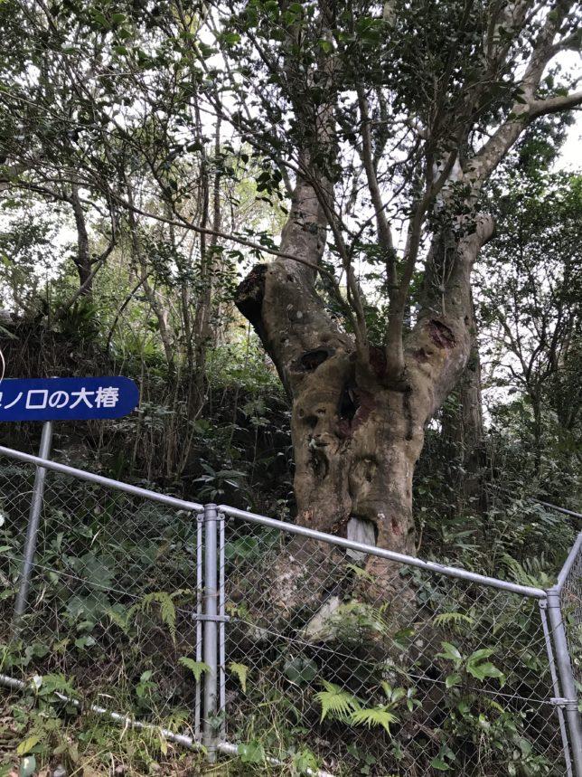 新上五島の稗ノ口の大椿