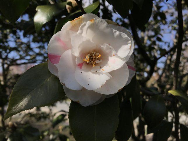 沖の石Oki-no-ishi 神代植物公園20180306
