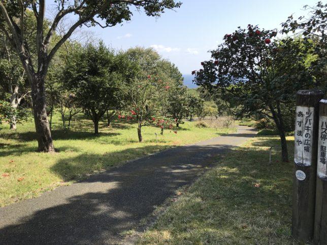 大島公園椿園 椿の広場