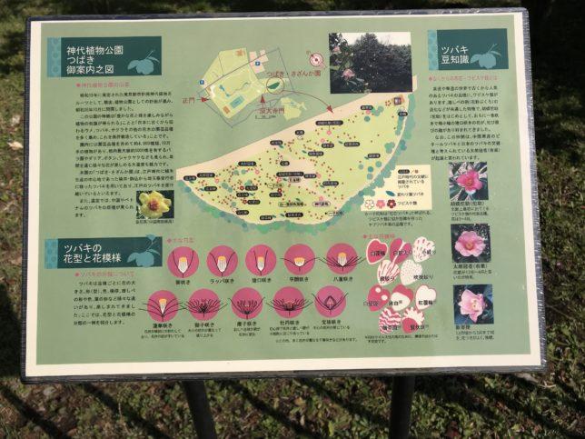 椿案内図 神代植物公園
