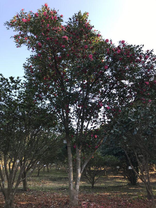 笑顔紅Egao-kurenai 都立大島高校20180129