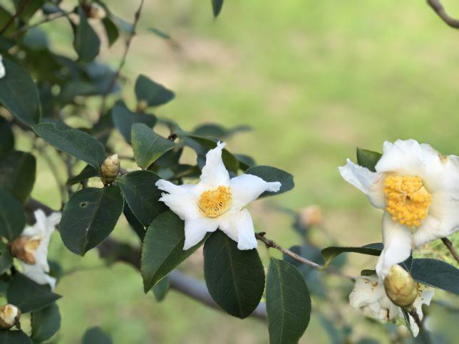 田毎の月Tagoto-no-tsuki 神代植物園20171104