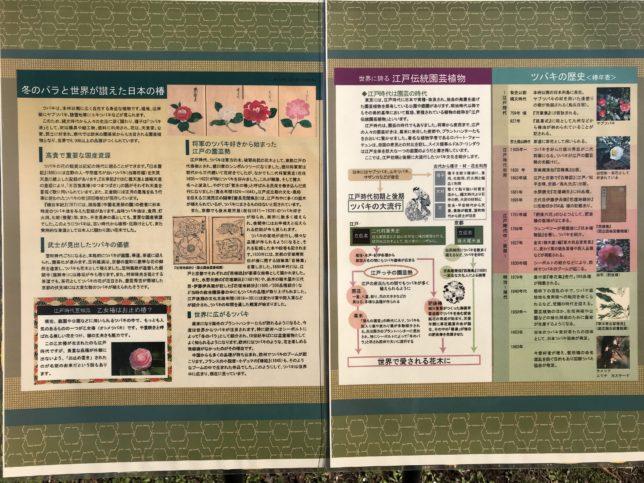 椿の歴史パネル 神代植物公園
