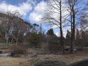 服部緑地公園20190201