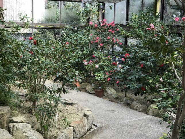 服部緑地公園温室20190201