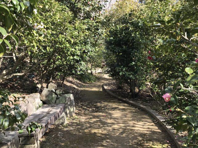 服部緑地公園椿山20190201