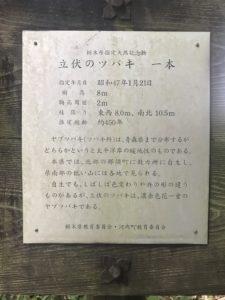 立伏(りゅうぶく)のツバキ案内板20190719