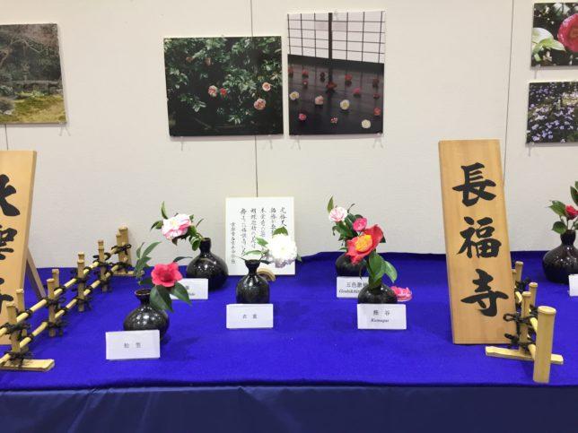 京都府立植物園椿展20170325