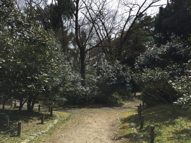 京都府立植物園20170325