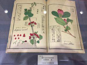 「草木花実写真図譜」1863 京都府立植物園椿展20170325
