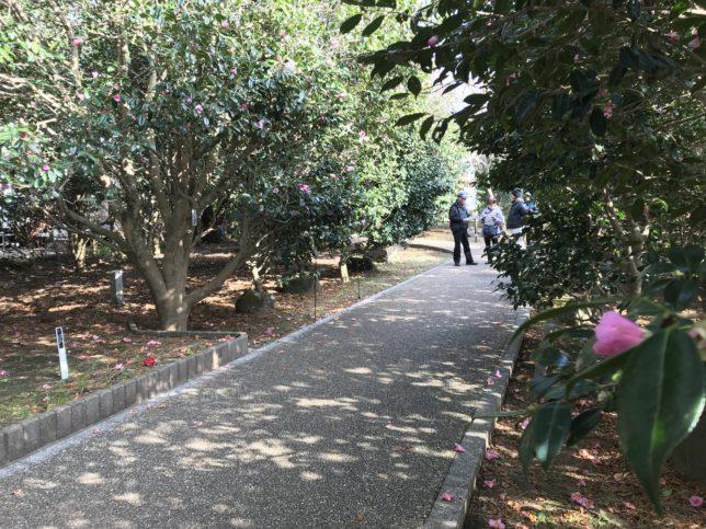小室山つばき園20190217