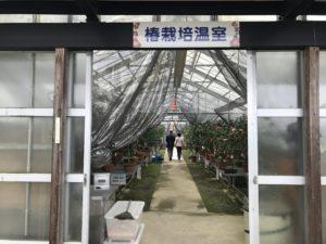 いのくち椿館椿栽培温室入口20190310