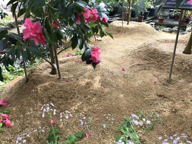 富山県立植物園雲南温室の土20190310