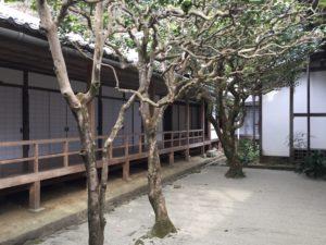 法然院中庭の三銘椿 20170405