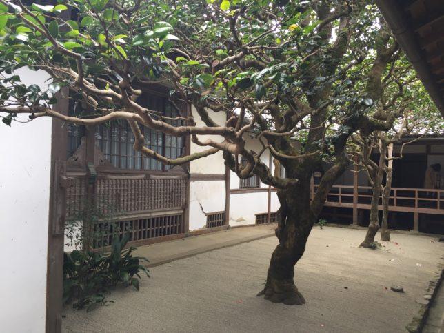 五色散椿 法然院 20170405