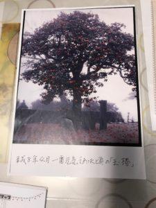 玉椿H8年の写真 満願寺20180310