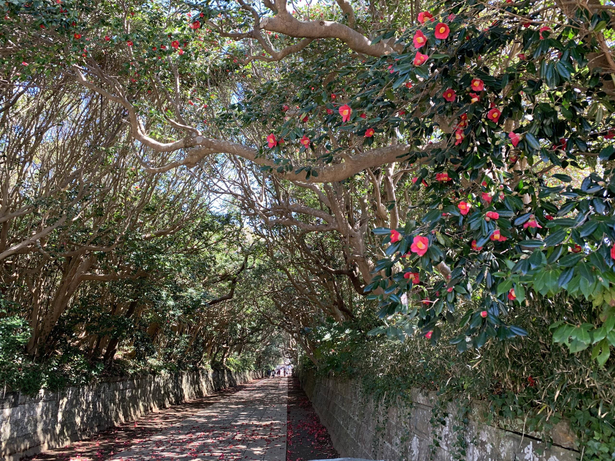 酒列磯前神社の樹叢 20210314