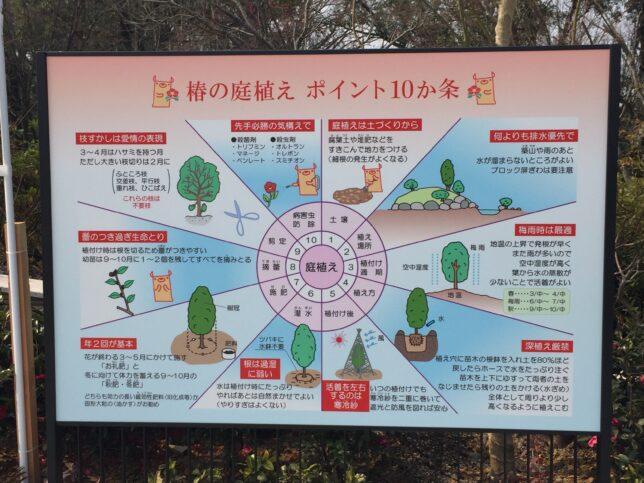 野々市中央公園椿山椿解説版220170319